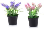 Gėlė Lavanda dekoratyvinė vazonėlyje 7,5x16 cm 871125298621 (4 spalvų)