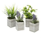 Gėlės dekoratyvinės vazonėliuose iš laikraščio 21x6.5x7 cm 871125299942