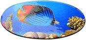 Magnetukas su nuotrauka, ovalo formos