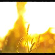 augalai2011.jpg