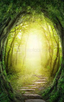 Click Props Background Vinyl with Print Enchanted Pathway 1.52 x 2.44M