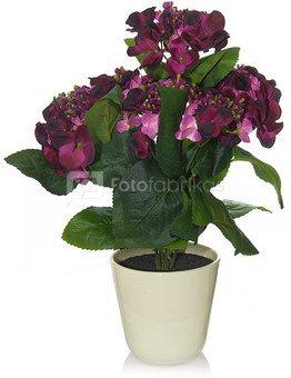 Dekoratyvinė gėlė Hortenzija vazonėlyje (6) H: 43 cm. PB05550EPOT SAVEX