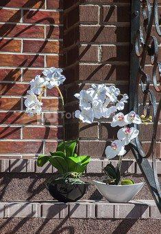 Dekoratyvinė gėlė Orchidėja vazonėlyje (1) H: 62 cm. PS022065PTPOT SAVEX