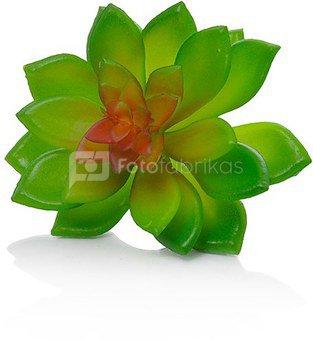 Dekoratyvinis augalas Sukulentas 10 cm HR16287 SAVEX