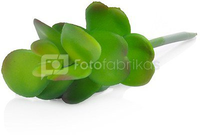 Dekoratyvinis augalas Sukulentas 14 cm HR16285 SAVEX