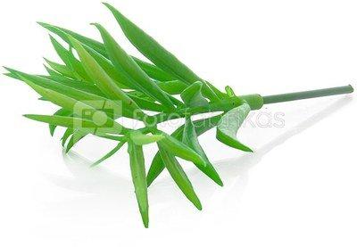 Dekoratyvinis augalas Sukulentas 17 cm HR16286 SAVEX