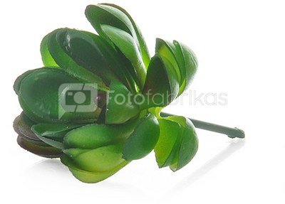 Dekoratyvinis augalas Sukulentas 7 cm HR16291 SAVEX