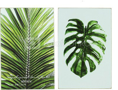 Reprodukcija Palmės lapas H:30 W:19 D:2 cm 61879 (galimi dviejų rūšių paveiksl.)