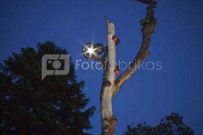 Trikojis Joby gorillatorch flare
