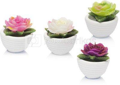 Žvakė Rožė indelyje 7x7 cm 50 gr. 871125293183 (4 rūšių)