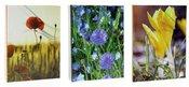 Albumas GED DPH4636NATURE 10x15 100/36 kišeninis | klijuotas