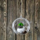 Burbulas stiklinis apvalus (4) YQO5115-4 dia15 cm SAVEX
