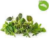 Click & Grow Plant Pod Italian Mix 9 шт.