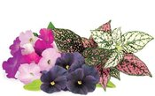 Click & Grow Plant Pod Vibrant Flower Mix 9 шт.