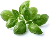 Click & Grow Smart Garden refill Базилик 3 штуки