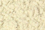 Newborn Popcorn Blanket Cream CRPB