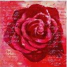 Reprodukcija 1707106 ant porėmio Rožės žiedas 88x88 SAVEX