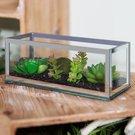 Terariumas stiklinis su sukulentais 20x8 cm 62774 Viddop