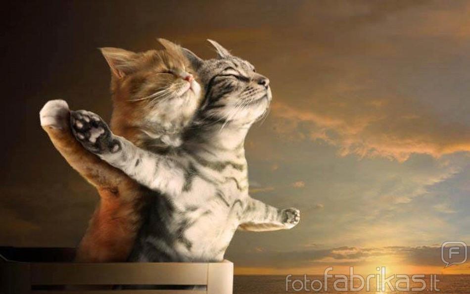 заболеваний, дефектов, картинки с котиками про любовь случае, если