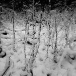 Jau žiema
