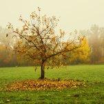 Medis rudenį