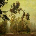 Rūkas miške