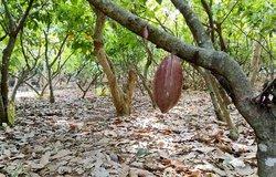 Kakavos sodas
