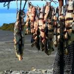 Žuvies kvapas Atlanto pakrantėje