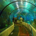 Didysis akvariumas