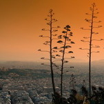 Vakarėjant agavos žengia į Akropolį