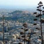 Atėnų agavos